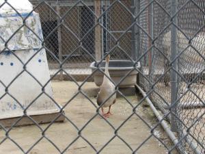 Tri Township Petting Zoo